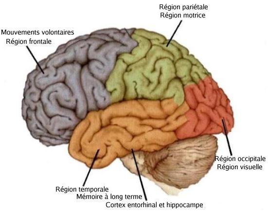 Une pathologie aux symptômes particuliers